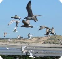 albatros-round