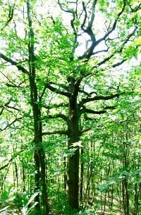 application-arbre