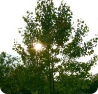 lumiere-round